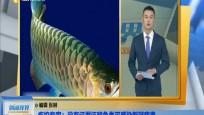 疾控专家:没有证据证明鱼类可感染新冠病毒