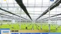"""保供稳价!海口计划种植1000亩春节""""特殊菜"""""""