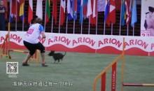 玩转体育之敏捷犬出征记1