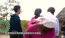我的青春在丝路·八月季 第9集 津巴布韦收棉记