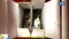 海口海关邮递渠道首次截获一批活体蜥蜴