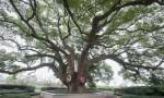 在海南砍三百年以上古树最高罚40万元 元旦起开始实施
