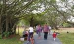 海口万绿园第一阶段改造春节前完工 生态修复见成效
