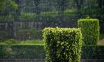 未来三天海南有雷阵雨局地中到大雨 最高气温36度