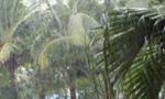 未来三天海南多地雨唱主角 最高32℃