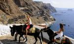 希腊禁止肥胖游客骑驴