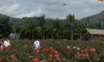 海南三亚:千亩盐碱地 遍开致富玫瑰花