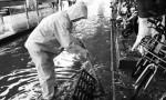 开闸污水入河关闸雨天积水 大雨浇出海口排涝难题