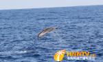 视频:我国首次在南海进行深潜鲸类科考  南海鲸类等海洋生物物种丰富