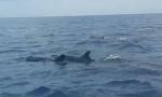 刚刚!记者采访途中在三?#31216;?#36830;屿海域邂逅一群呆萌可爱的海豚
