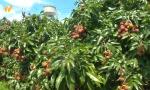 海南農產品地理標志已達28個