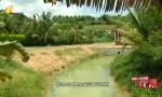 生态人居环境红榜:屯昌市坡村 生活污水处理利用相结合 人工湿地效率高