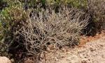 针对红树林破坏等问题 澄迈建立清单严肃整改
