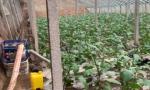台风过境蔬菜之乡,记者寿光实地探访
