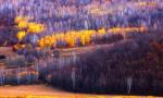 国家林业和草原局:全面停止天然林商业性采伐