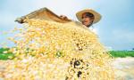 人民日报头版头条:丰收,是亿万农民最美的寄托