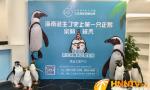 海南诞生了史上第一只企鹅!它的首场见面会即将开始~