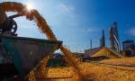 农业农村部提出2020年粮食总产量稳定在1.3万亿斤以上
