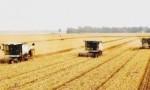 韩长赋:今年夏粮小麦丰收在望