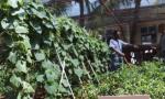 厉害!西沙战士在盐碱沙地上种出蔬菜