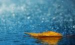 注意防范!海口发布雷雨大风黄色预警