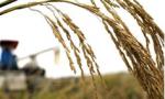 国家粮食和物资储备局:我国稻麦库存均能满足1年以上需求
