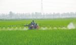 中共中央 国务院 关于全面推进乡村振兴 加快农业农村现代化的意见