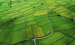 国务院台办、农业农村部、国家林草局等部门出台《关于支持台湾同胞台资企业在大陆农业林业领域发展的若干措施》