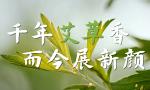 习近平河南行丨千年艾草香 而今展新颜——走进南阳药益宝艾草制品有限公司