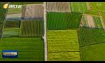 """海南:高標準農田""""一張圖 一個數""""   提?升科學化精準化管理水平"""