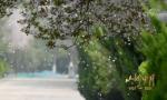 《山河岁月》 第三十四集 五月的鲜花