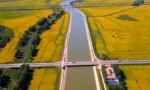 【在习近平新时代中国特色社会主义思想指引下】夯实粮食生产能力基础 端牢14亿多中国人的饭碗