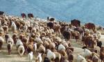 我们的共同家园|COP15大会主题宣传片