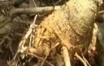 """村民心疼果树被挖坏 """"中移建设""""施工设备不到位"""
