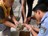 三亞機場成功救助國家二級保護動物短耳鸮