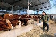 新春走基层 | 北庄村:养殖业让村民腰包鼓起来