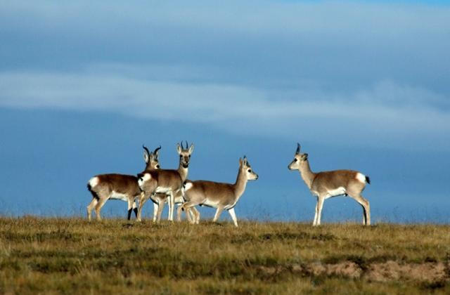 中国将修法保护野生动物栖息地