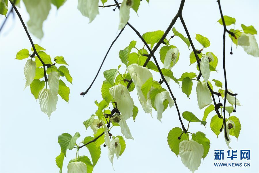 #(社會)(4)谷雨時節 綠意盎然