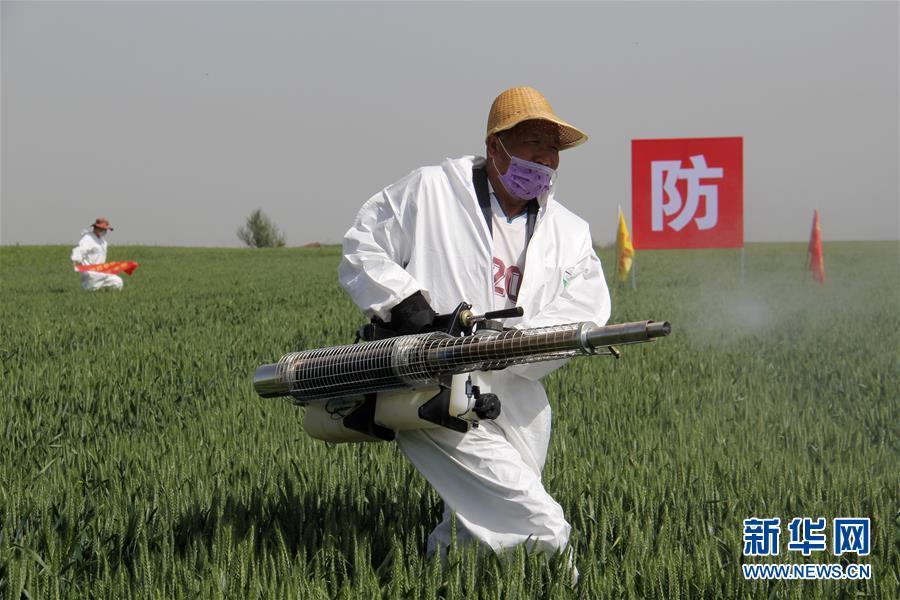 (聚焦中国经济亮点·图文互动)(8)夏粮收获近八成 丰收已成定局