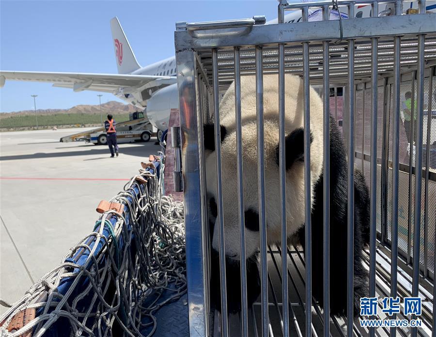 """(图文互动)(4)大熊猫首次""""落户""""高原城市西宁"""