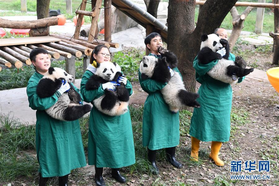 (社会)(6)大熊猫宝宝闹新春