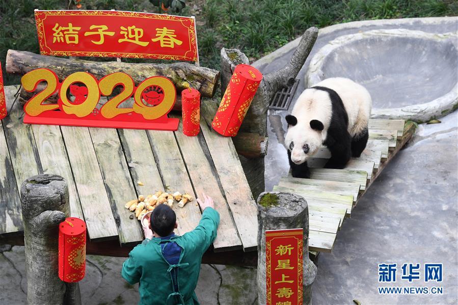 (社会)(3)大熊猫宝宝闹新春