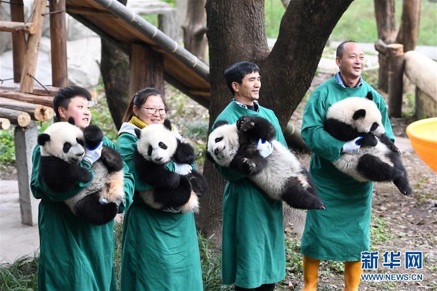 (社会)(5)大熊猫宝宝闹新春