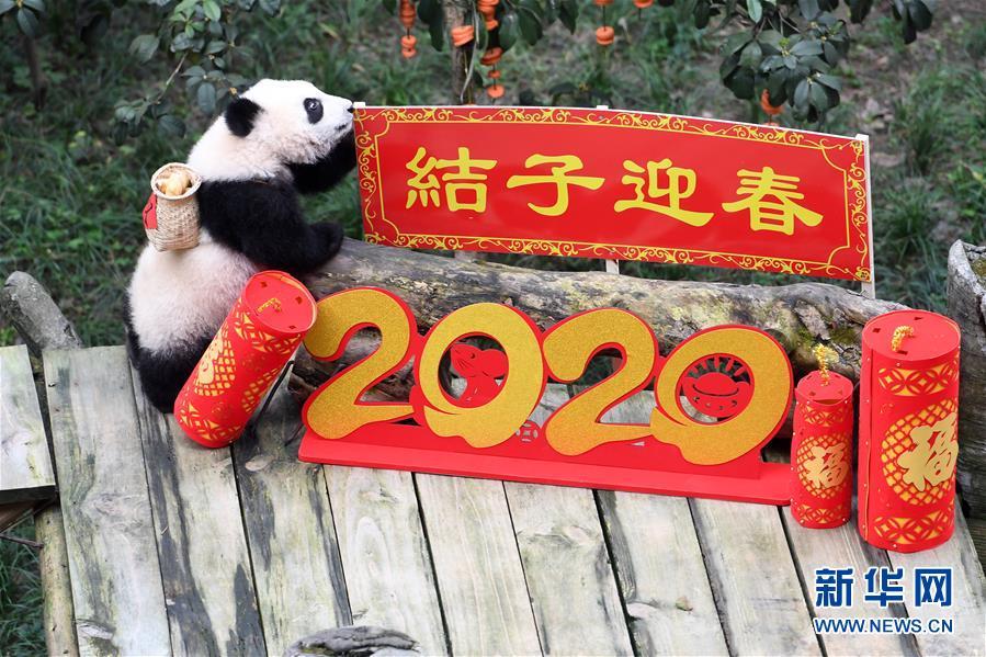 (社会)(7)大熊猫宝宝闹新春