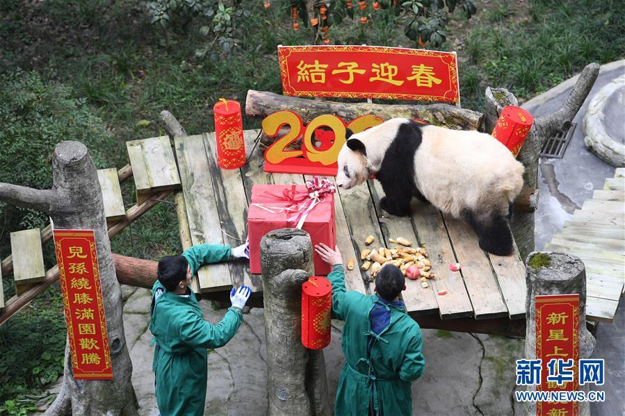 (社会)(1)大熊猫宝宝闹新春