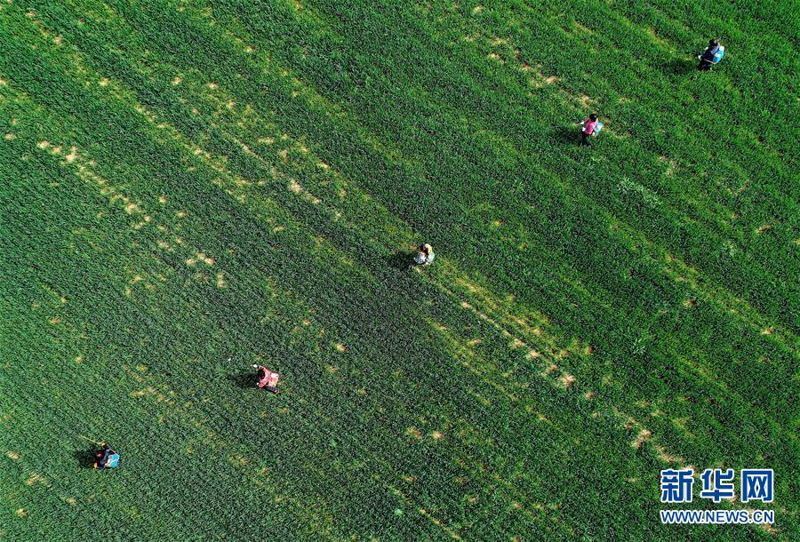 (新华全媒头条·图文互动)(5)春天,汇聚复苏的力量——写在2020年首季中国经济收官之际