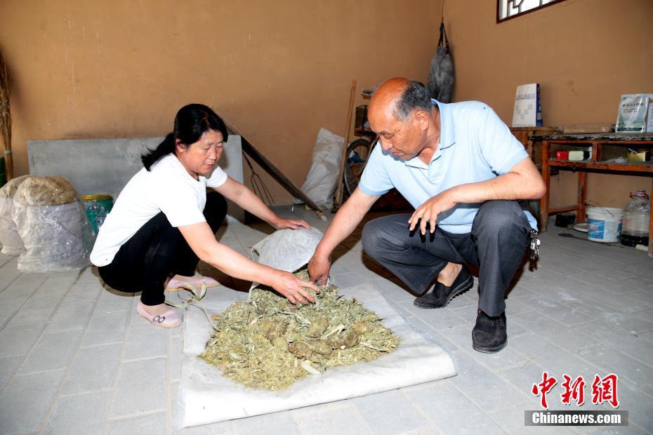 """探访陕西起良村""""熊猫纸"""" 用熊猫粪便制作纸"""