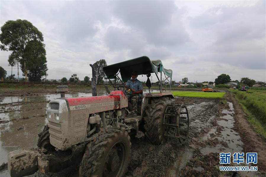 """(国际)(2)尼泊尔农民""""水稻节""""里忙插秧"""