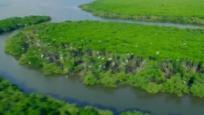 新时代 新气象 新作为:海南 精心守护绿水青山 环境质量指数排名全国第一