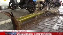 棕榈树枝坠落砸伤路人 物业管养不到位承诺整改